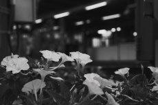 flower627-3