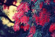 flower631
