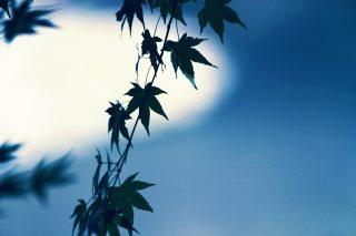 【高解像度】紅葉の葉(3パターン)