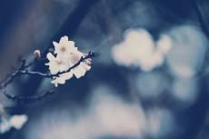 flower646-2