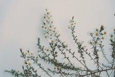 flower654