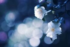 flower660