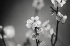 flower667-3