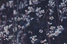flower673-2