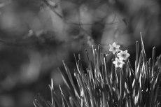 flower679-3