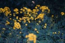 flower686