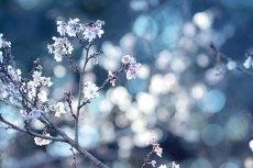 flower692-2