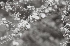 flower745-3