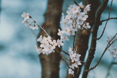flower747
