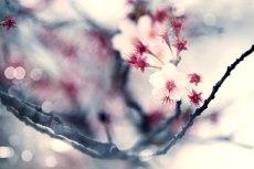 flower758