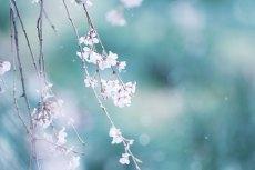 flower773