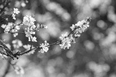 flower780-3