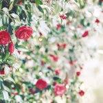 【高解像度】点々と咲く赤い椿(ツバキ)(3パターン)
