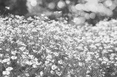 flower794-3