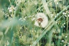 flower800-2