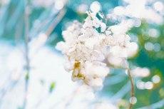flower803