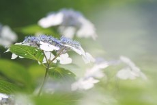 flower826-2