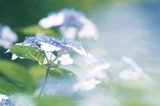 flower826