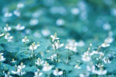 flower828