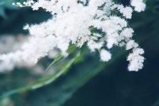 flower833