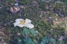 flower839-2