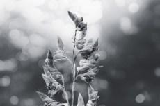 flower858-3