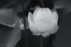 flower859-3