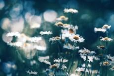 flower877