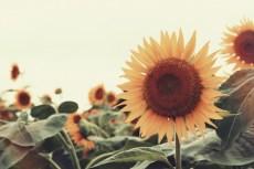 flower883