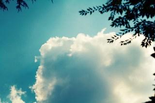 【高解像度】空と木のシルエット(3パターン)