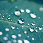 【高解像度】葉の上の水玉(3パターン)