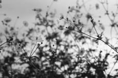 flower911-3