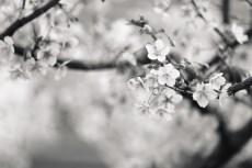 flower934-3
