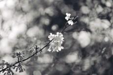 flower936-3