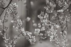 flower938-3