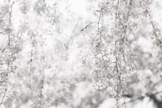 flower948-3