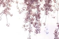 flower949-2