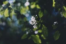 flower1007