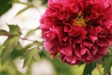 flower992-2
