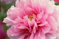 flower994