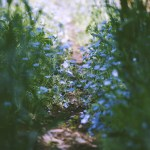 【高解像度】茂る緑とネモフィラ(3パターン)