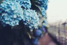 flower1048