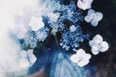flower1051-2