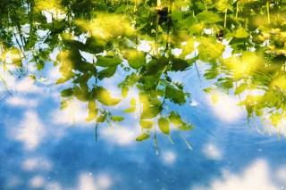 【高解像度】逆さまの半夏生(ハンゲショウ)(3パターン)