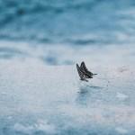 【高解像度】水辺の蝶(3パターン)