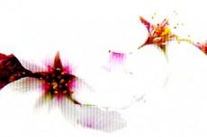 flower021