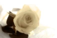 flower137