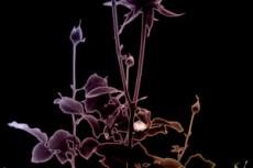 flower173