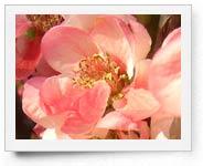 peper-curl-flower013