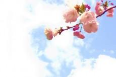 flower234